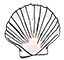 scallop-shell